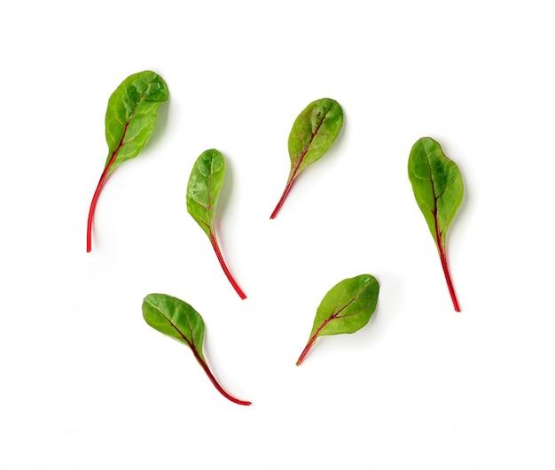 白い背景の上に新鮮なフダンソウ葉またはマンゴールドサラダの葉のセット。