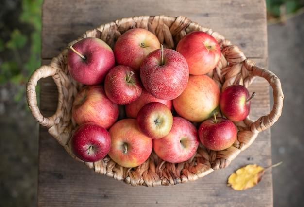Корзина спелых вкусных яблок на огороде
