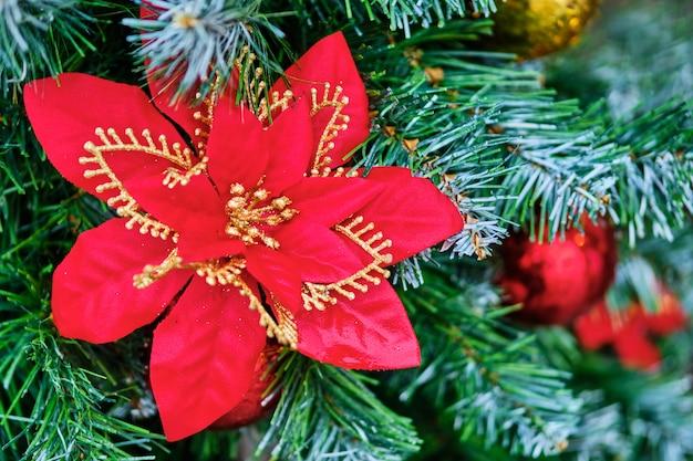 Рождественский красный цветок в ветвях дерева.