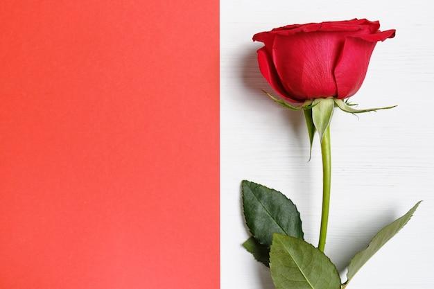 赤い紙の背景にバラ。バレンタインの日