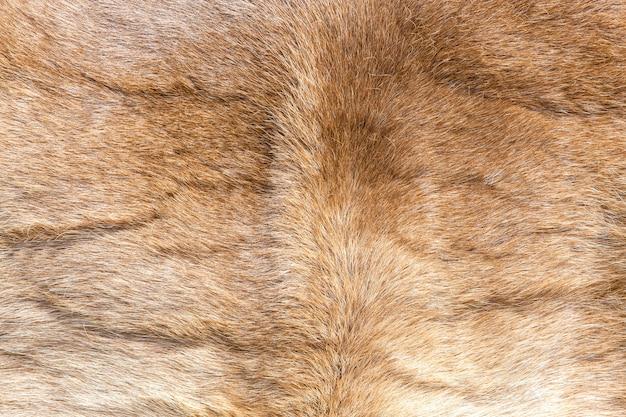 色のトナカイの毛皮の質感。