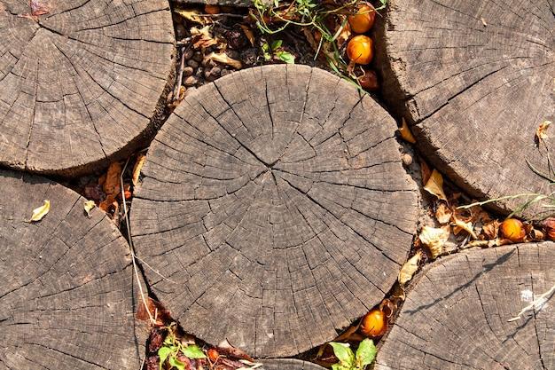 背景の木の切り株テクスチャのトップビュー