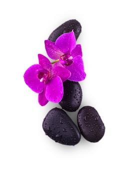Черные камни и цветок орхидеи с каплями