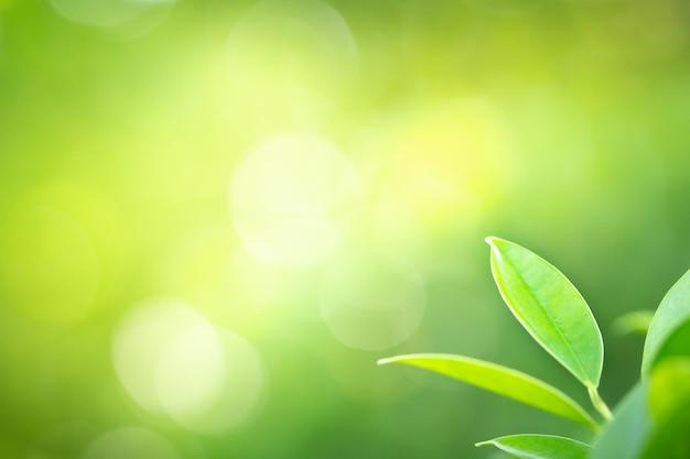 Зеленые листья с красотой боке на фоне природы и свежести