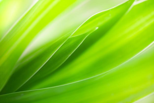 Макрос вид текстуры зеленых листьев