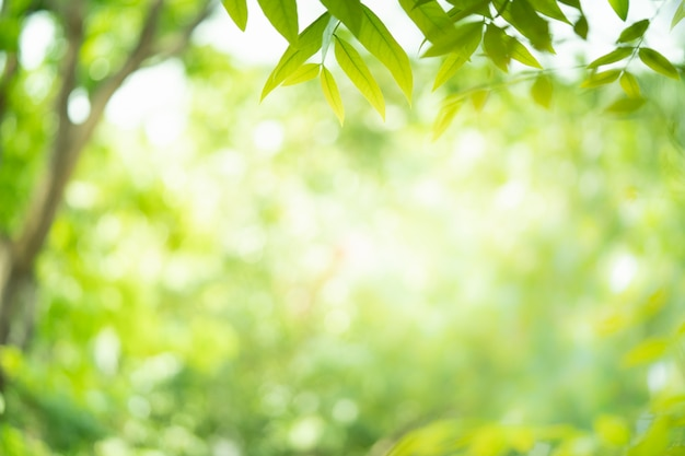 Зеленая природа с красотой боке