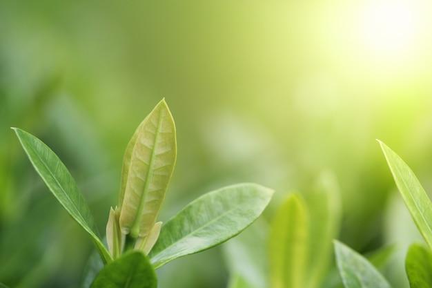 Зеленый лист фон. концепция природы и свежести
