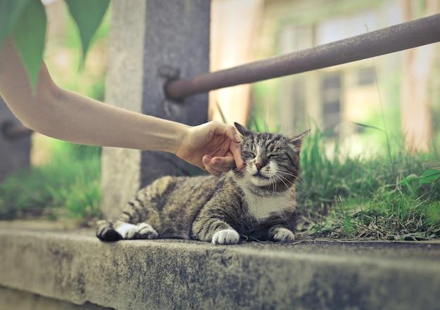 かわいい猫を撫でる