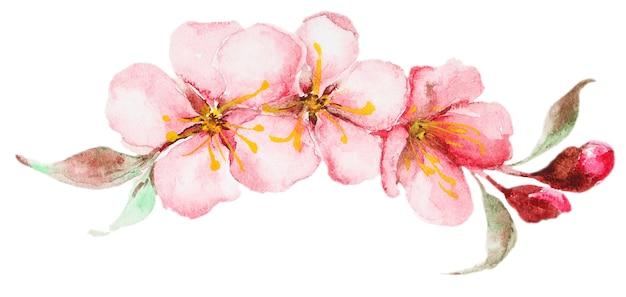 Акварельные цветы сакуры