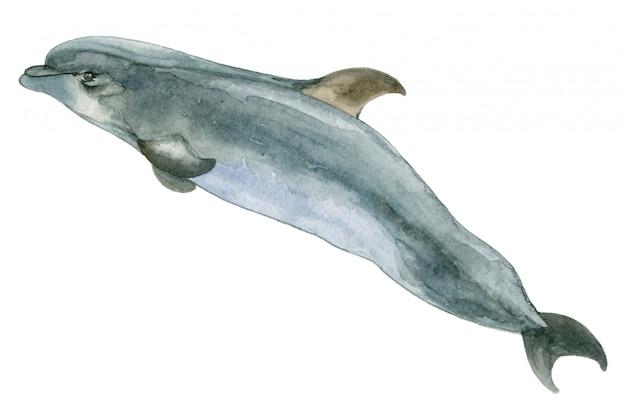 水彩の青いイルカ