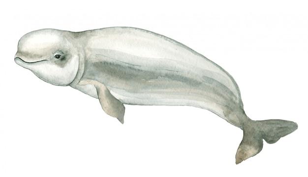 水彩の白いイルカ