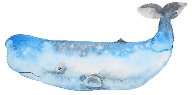 水彩のシロナガスクジラ