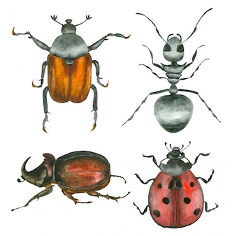 水彩の手描きの昆虫