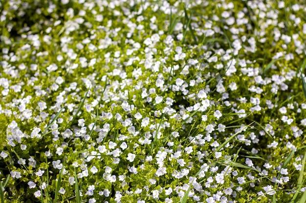 春や夏の緑の野原で野生の花のパターン