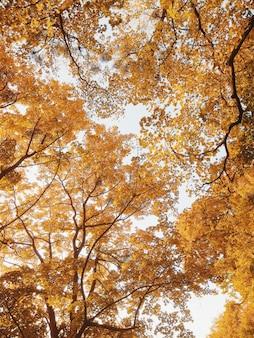 秋の公園で美しい黄色の木の枝