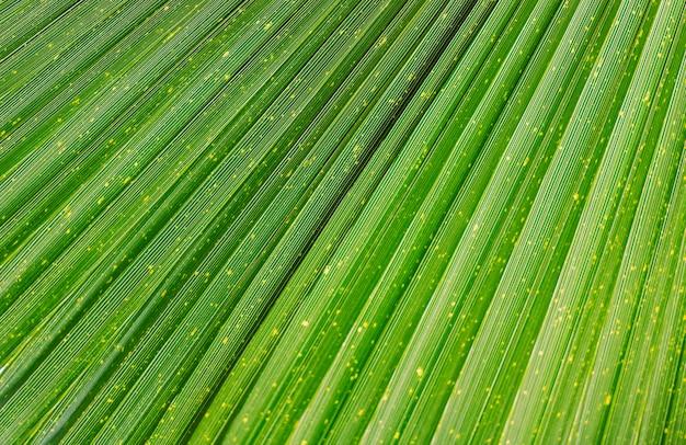 Закройте вверх яркой тропической зеленой текстуры лист.