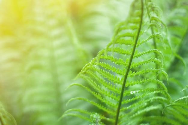 Крупным планом свежего ярко-зеленого папоротника весной с солнечной вспышки