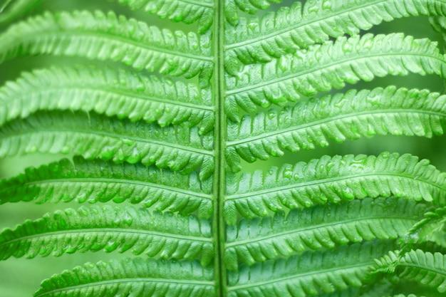 Крупным планом свежий ярко-зеленый папоротник весной с малой глубиной резкости