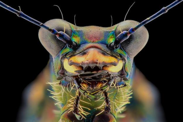 Макро лицо тигрового жука