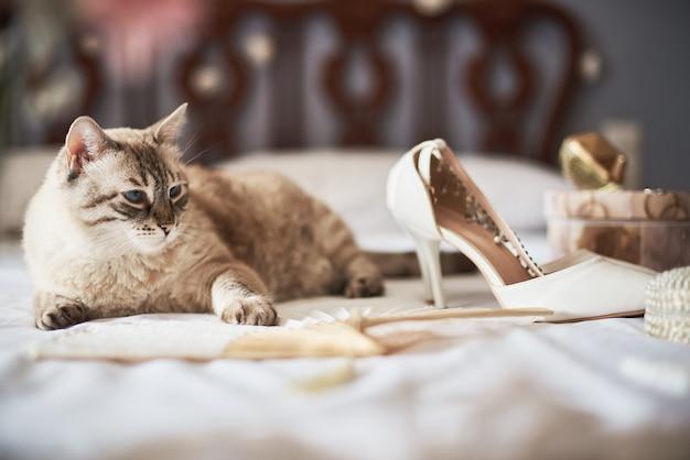 スタイリッシュな白いウェディングブライダルシューズ、香水、花、ジュエリー、ベッドの上の猫。