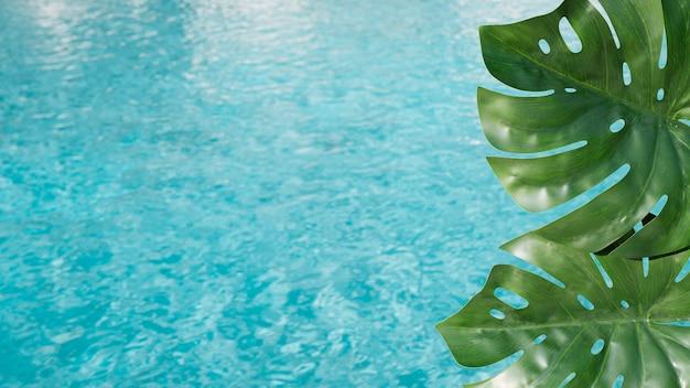 プールの背景を持つ熱帯の葉