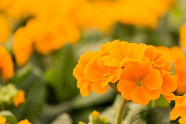 コピースペースを持つ黄色の夏の花