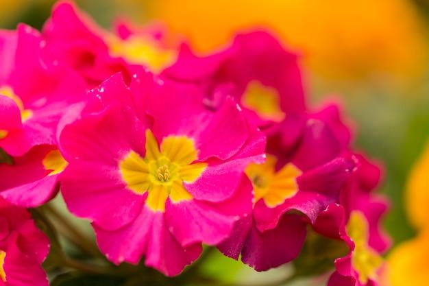 コピースペースとピンクの花