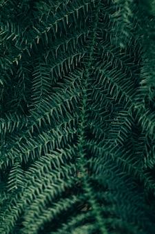 背景の植物のシーン