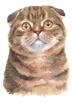 スコティッシュフォールドショートヘア猫の水彩画