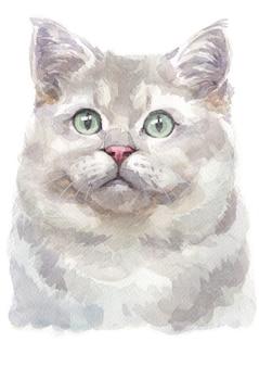 ブリティッシュショートヘアの猫の水彩画