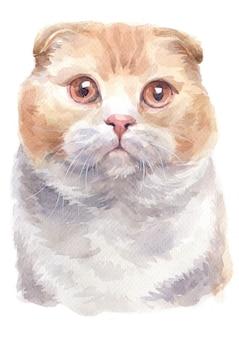スコティッシュフォールドのショートヘア猫の水彩画