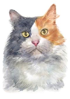 希薄三毛猫の水彩画