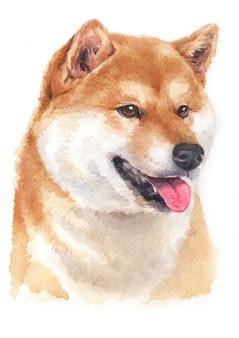 柴犬の水彩画