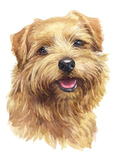 水彩画、茶色の犬、ノーフォークテリア