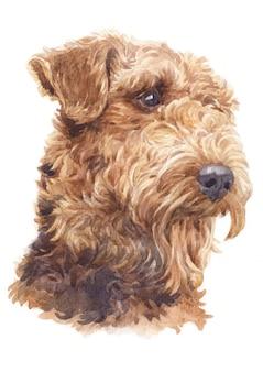 水彩画、エアデールテリア犬の巻き毛