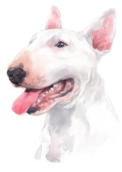 水彩画、白犬種、ブルテリア