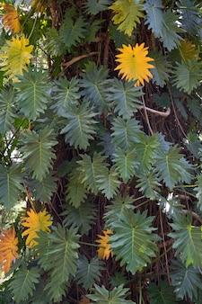 木の幹を覆う緑と黄色の色調の葉