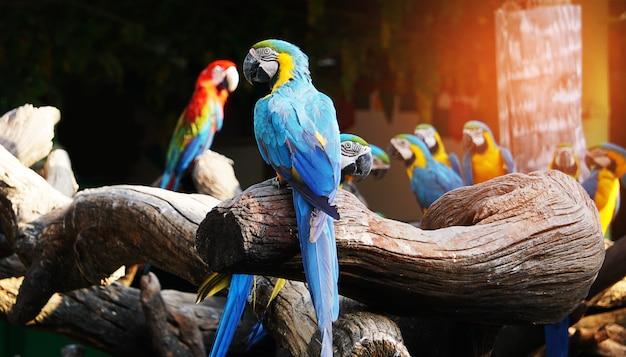 木の枝にカラフルなコンゴウインコ鳥