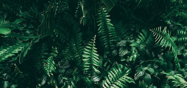 暗いトーンの熱帯の緑の葉。