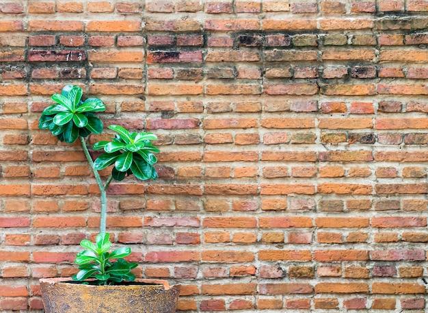 オレンジ色のレンガの壁を小さな植物で飾る