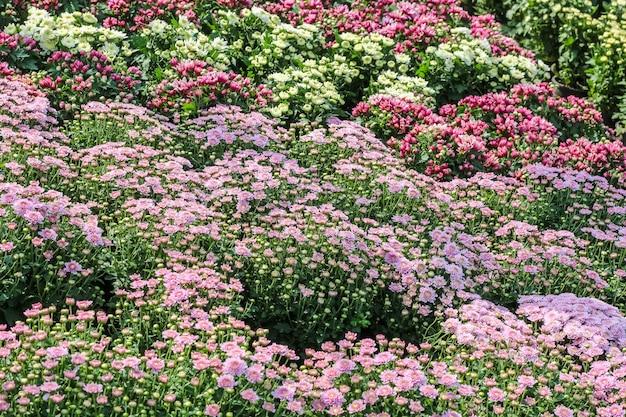 色とりどりの派手な花の様々な