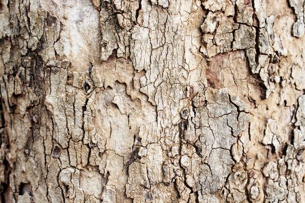 樹皮のテクスチャーを背景としてクローズアップ