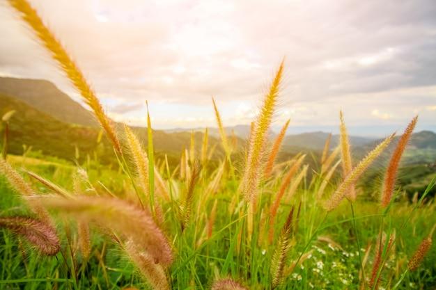 Красивая миссия трава цветок крупным планом