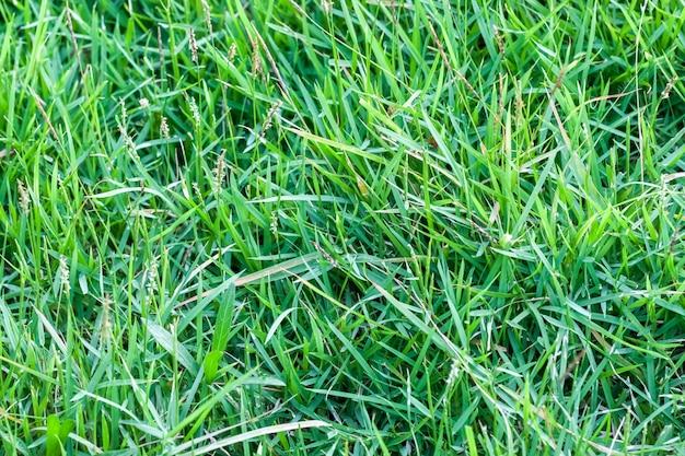緑の芝生フィールドの背景