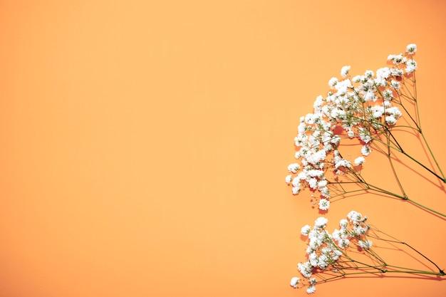 美容化粧品、カスミソウの白い花、母の日婦人の概念。フラット横たわっていた、トップビュー。