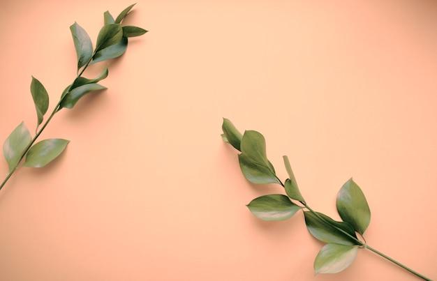 自然化粧品のスキンケア、緑の小枝。オーガニック製品、バイオサイエンス、代替医療、スパ。コピー用のスペース。孤立した