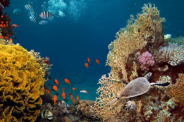 水中で命を与える日光。熱帯のサンゴ礁の水中で太陽光線が輝いています。