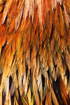 いくつかの鳥の明るい茶色の羽のグループ