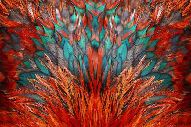 Яркие коричневые перья петуха крупным планом.