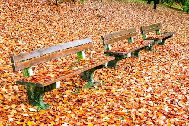 Пустая скамейка в парке, окруженная осенними желтыми листьями.